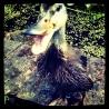 Dorrit Duck