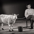 Sheep & handler